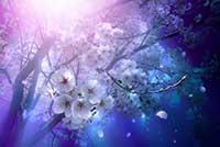 誘桜 Special Edition